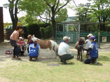 240519mokubaen_pony.jpg